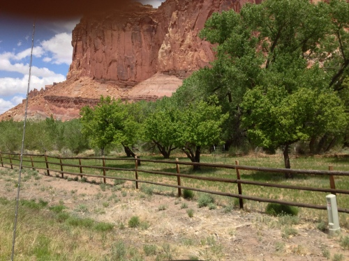 Fruit orchards which the Mormons planted and the National Park Service now tend.